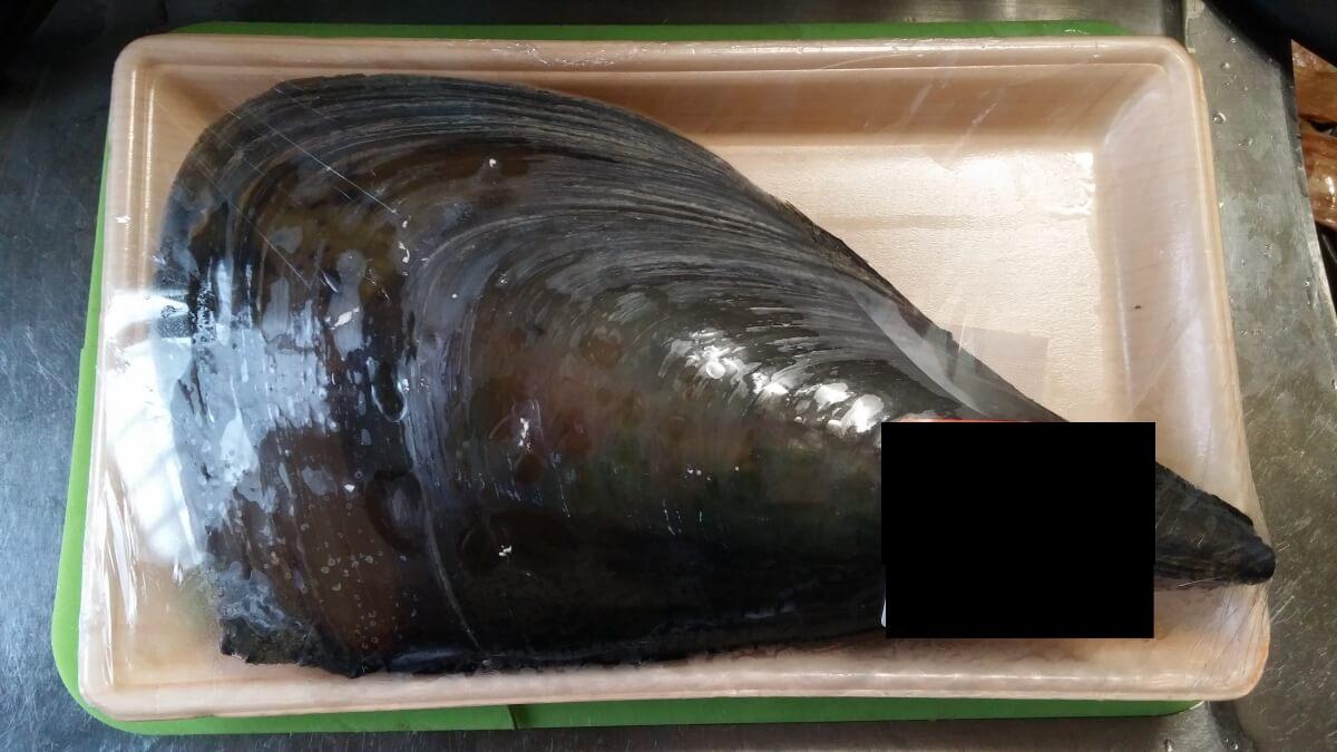 【平貝】見かけたらラッキー?スーパーで売ってた平貝を捌いてみました【タイラギ】