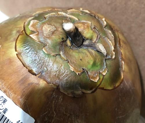 ココナッツのヘタ