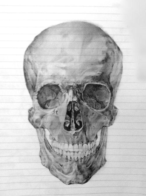 鉛筆画 模写 頭蓋骨