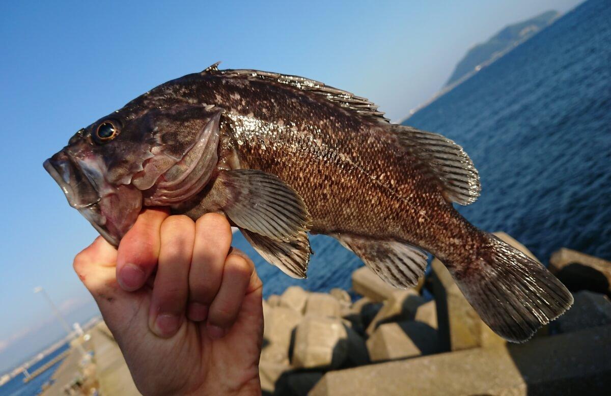 海釣り初心者におすすめの釣り竿の選び方